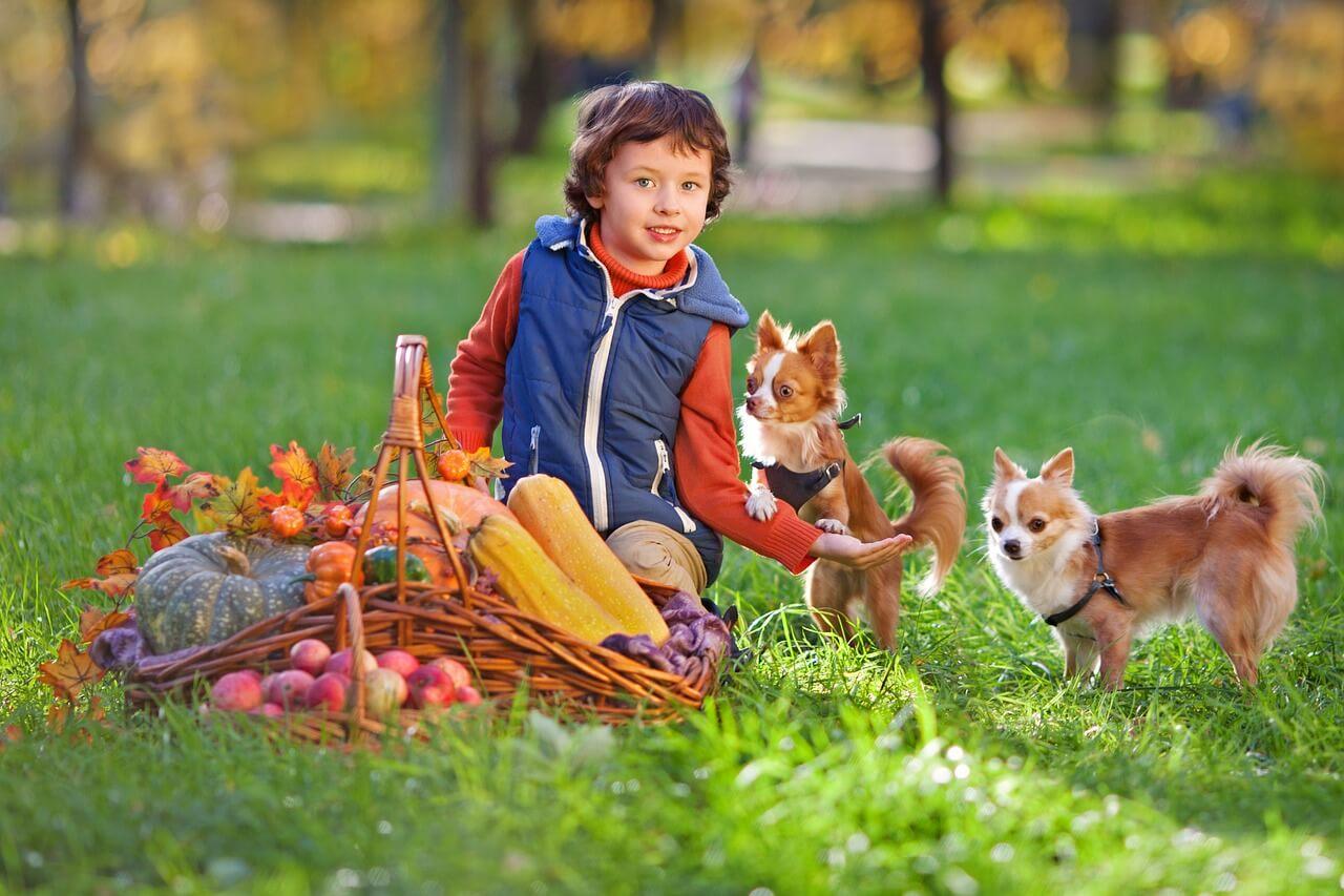 犬と遊ぶ子供