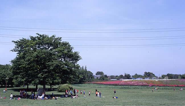 小金井公園でバーベキュー