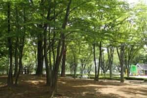 むさしのの都立公園バーベキュー広場