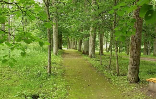 森林に囲まれた森でバーベキュー