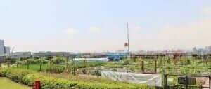都会の農園 バーベキューテラス