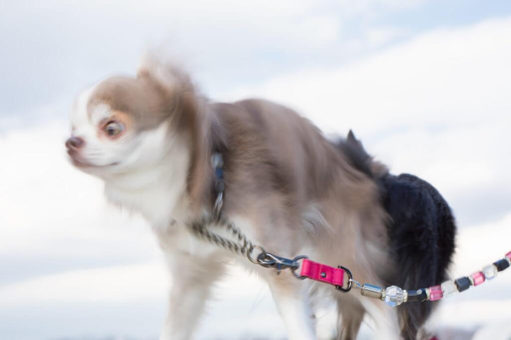 チェーンに繋がれた犬