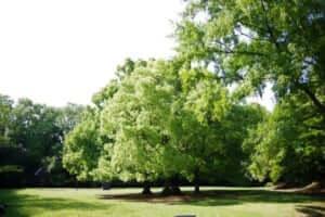 木のある公園