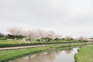 さくら咲く堤防の公園