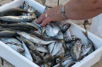 漁師と獲った魚